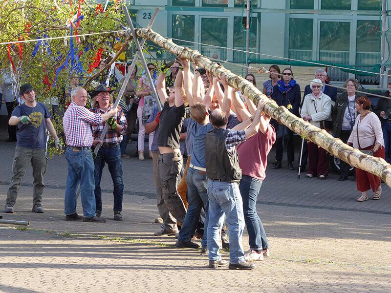 Maiansingen 2017 Das Aufrichten des Maibaumes benötigt kräftige Männer